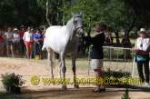 Trot Up